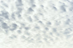 Altocumulus  Clouds  in cloudscape Stock Images