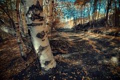Altomontana path crosses autumnal birch trees in Etna Park stock image