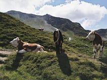 Altopiani alpini meravigliosi con il cielo perfetto montagnoso fotografia stock libera da diritti