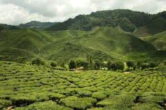 Altopiani di Cameron in Malesia, panorama Fotografie Stock Libere da Diritti