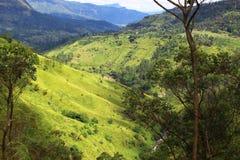Altopiani nello Sri Lanka Fotografie Stock