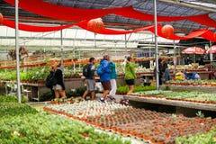 ALTOPIANO DI CAMERON, MALESIA - FEBBRAIO 2019: I turisti comperano nell'azienda agricola locale del cactus in Cameron Highlands C immagini stock