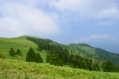Altopiano di Fujimidai a Nagano/Gifu, Giappone Immagine Stock
