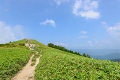 Altopiano di Fujimidai a Nagano/Gifu, Giappone Immagini Stock Libere da Diritti
