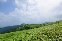 Altopiano di Fujimidai a Nagano/Gifu, Giappone Fotografie Stock
