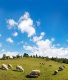 Altos cielo y ovejas de la montaña en prado fotografía de archivo