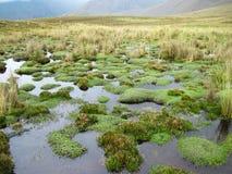 Altos humedales en el Blanca de Cordillera, Perú de la elevación Fotos de archivo libres de regalías