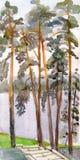Altos pinos en el banco del lago libre illustration