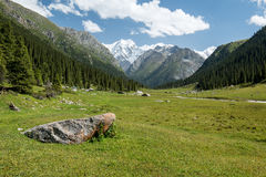 Altyn Arashan valley in Kyrgyzstan. Tian Shan mountains in Kirghizia, landscape Royalty Free Stock Photography
