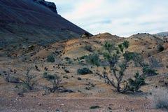 Altyn-Emel nationalpark, kanjon Ak-Tau Arkivfoton