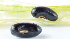 Alubia negra fresca Imagen de archivo