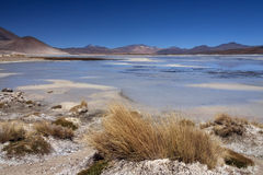 Alues Calientes Lagoon - Atacama Desert - Chile royalty free stock image