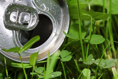 Aluminum beer can. And clover Stock Photography
