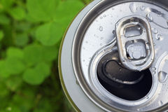 Aluminum beer can. And clover Royalty Free Stock Images