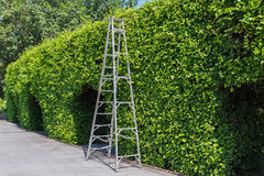 Aluminum ladder with wall green. Plant Stock Photos