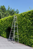 Aluminum ladder with wall green Stock Images