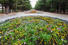 Flowers in Culture and Recreation park in Alushta. ALUSHTA, CRIMEA - SEPTEMBER 22, 2017: people and view of flowerbed in Culture and Recreation park in Alushta Royalty Free Stock Photo