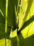 Aluvra plant stock photos
