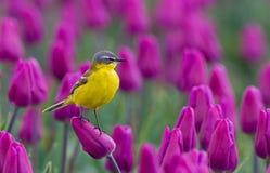 Alvéola amarela Foto de Stock Royalty Free