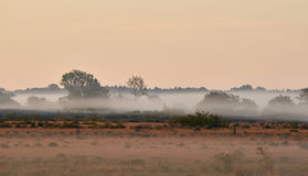 Alvar limestone moor in the early morning. Light at Isle if Oeland, province Kalmar, Sweden Royalty Free Stock Photo