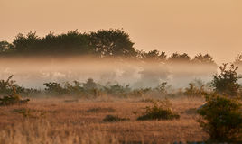 Alvar limestone moor in the early morning. Light at Isle if Oeland, province Kalmar, Sweden Royalty Free Stock Images