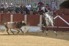 Alvaro Montes, bullfighter on horseback spanish, Ubeda, Jaen, Spain Royalty Free Stock Image