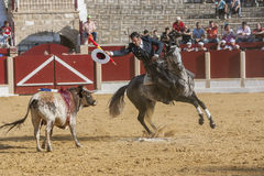 Alvaro Montes, bullfighter on horseback spanish, Ubeda, Jaen, Spain Stock Photos
