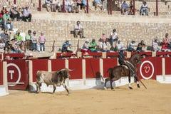 Alvaro Montes, de toréador garrocha espagnol de sorcière à cheval ( Image libre de droits