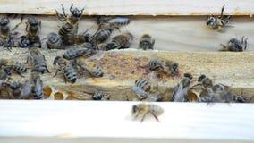 Alveare con le api stock footage