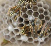 Alveare dell'ape Fotografia Stock