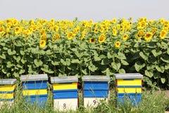 Alveare dell'ape Fotografie Stock