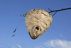Alveare dell'ape, la cosa vera Fotografie Stock