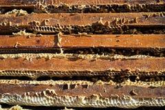 Alveare delle api i del miele Fotografia Stock