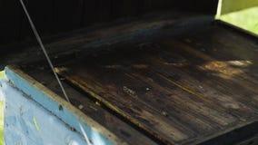Alveare di apertura con le api calme stock footage