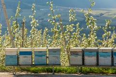 Alveare in un frutteto in primavera nella campagna non della valle Val di Non, Trentino Alto Adige, Italia del Nord immagine stock libera da diritti