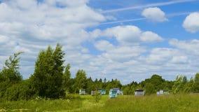 Alveari del miele nella foresta di primavera contro il fondo del cielo blu archivi video