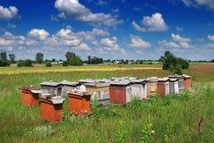 Alveari dell'ape Immagine Stock