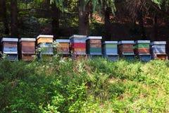 Alveari dell'ape Immagini Stock