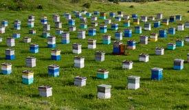 Alveari dell'ape Immagine Stock Libera da Diritti