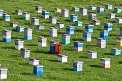 Alveari dell'ape Fotografie Stock