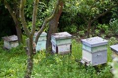 Alveari dell'ape Fotografia Stock Libera da Diritti
