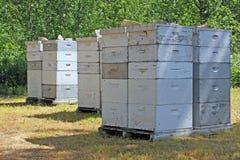 Alveari della casella degli apicoltori Fotografia Stock Libera da Diritti