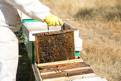 Alveari di lavoro dell'apicoltore Immagini Stock
