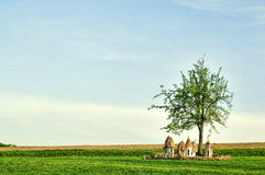 Alveari di legno ucraini in un campo sotto un albero Immagini Stock Libere da Diritti