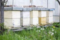 Alveari e api Fotografia Stock Libera da Diritti