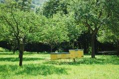 Alveari gialli Immagini Stock Libere da Diritti