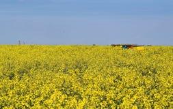 Alveari nel giacimento di fioritura del canola durante la primavera Fotografia Stock