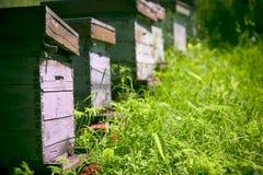 Alveari nel giardino Fotografie Stock Libere da Diritti