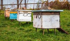 Alveari nell'arnia Completamento della stagione estiva della raccolta del miele fotografia stock libera da diritti