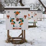 Alveari nell'arnia in primo piano di inverno Immagine Stock Libera da Diritti